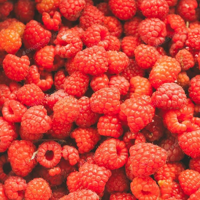 Fresh Red Sweet Berries Raspberries Background.