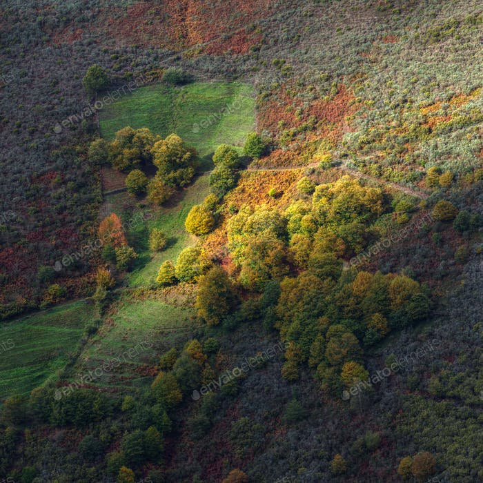 Autum Colors in the Mountain Slope
