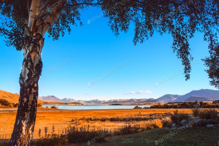 Autumn colorful view of Lake Tekapo framed with a tree at sunrise