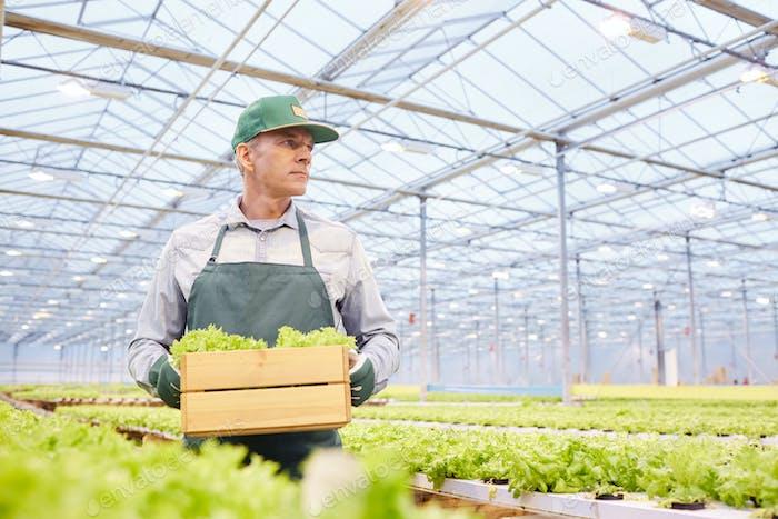 Arbeiter Holding Box auf Gemüseplantage