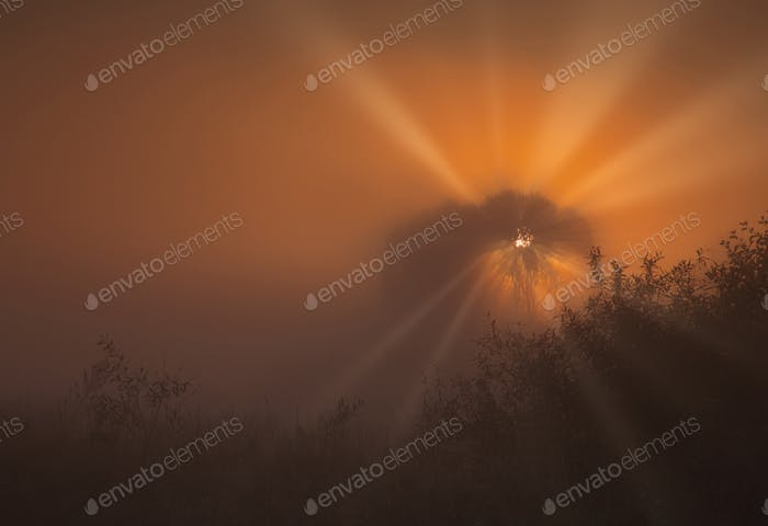 A beautiful, misty, autumn sunrise