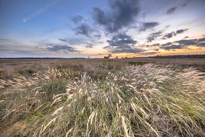 Natural heathland landscape with grass vegetation