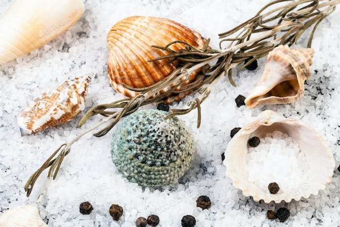 still life with shells, Sea Salt and peppercorn