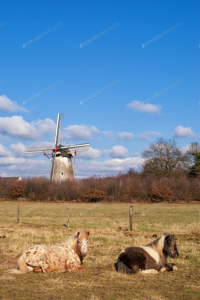 The Hernense windmill