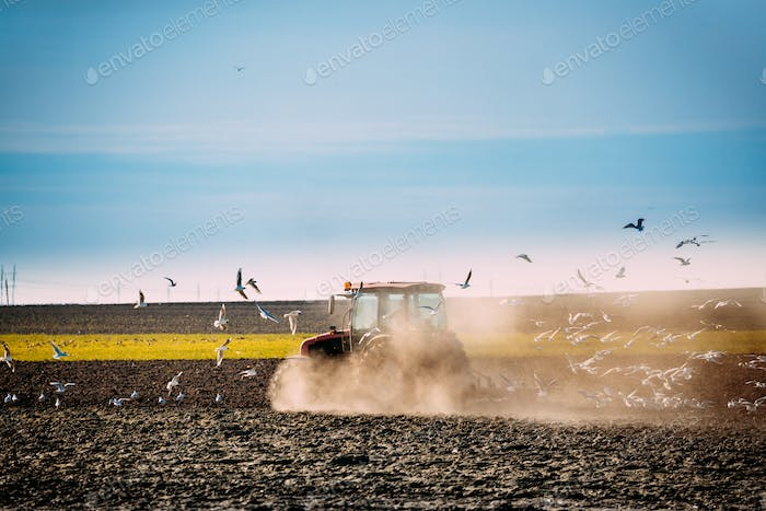 Flock Of Birds Of Seagull Flies Behind Tractor Plowing Field In