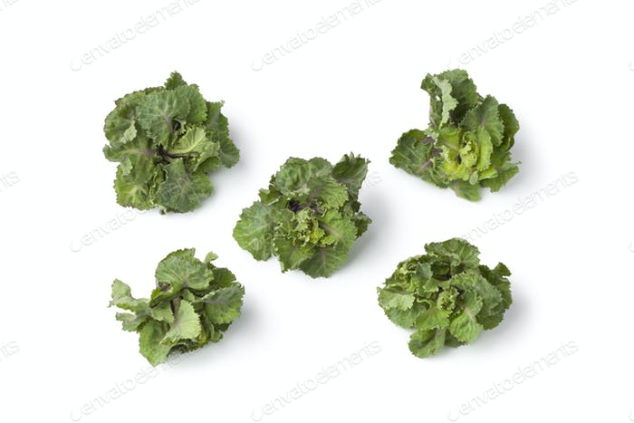 Fresh green flower sprouts
