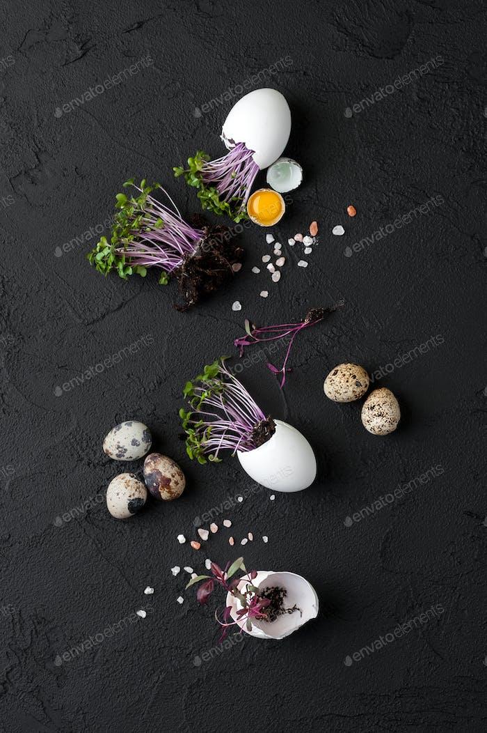 Fresh watercress salad in eggshell and quail eggs on a black bac