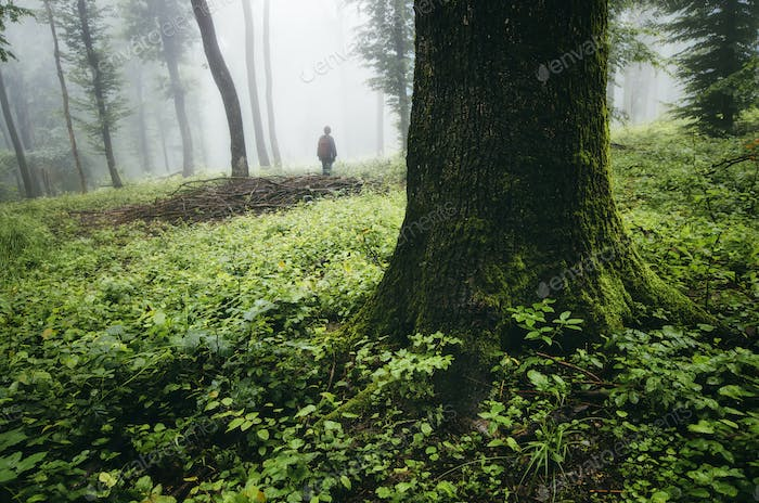 man silhouette in green forest with old trees and green vegetati