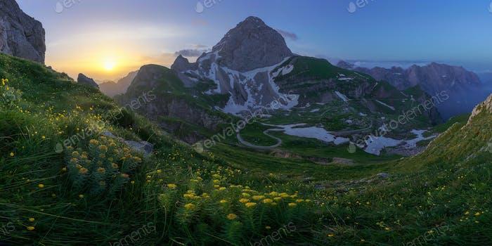 Blumen in den Bergen auf einem schönen Sonnenaufgang nach der stürmischen Nacht