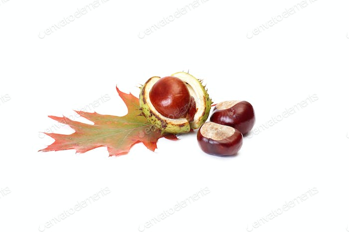 Chestnuts and oak leaf on a white.
