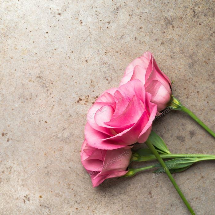 Rosa Blumen auf Grunge-Hintergrund