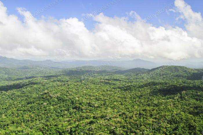 Aerial View of Endless Pristine Jungle in Belize