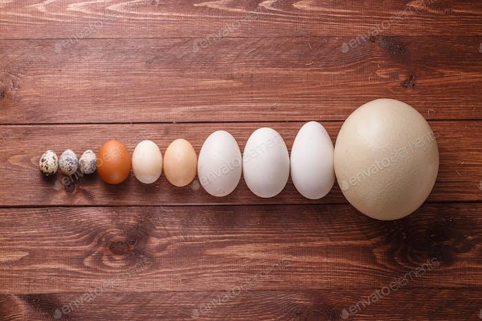 Quail eggs, hen eggs, goose eggs, ostricg egg