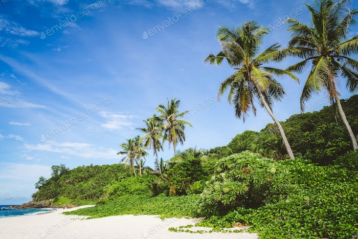 Coconut palm trees and jungle foliage on tropical secluded sandy beach against a blue sky