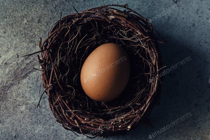 Egg in bird nest