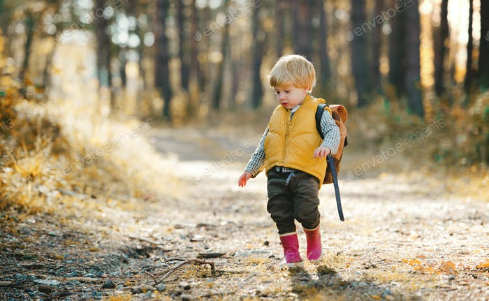 A toddler son with backpack standing on a road in an autumn forest.