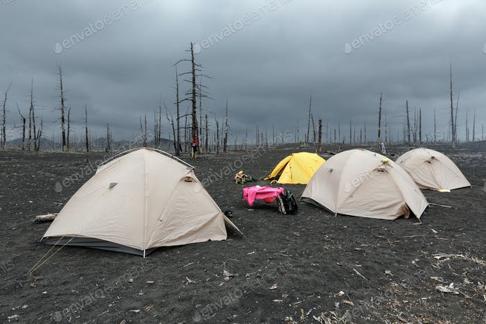 Touristic Tents in Dead Wood On Kamchatka Peninsula
