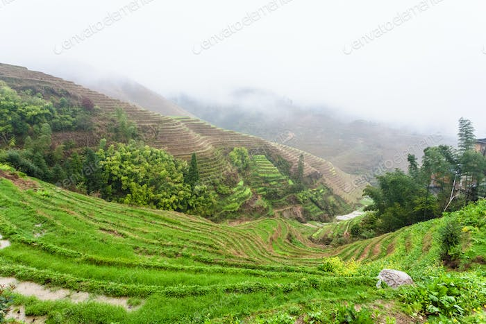 view of wet terraced rice fields under clouds