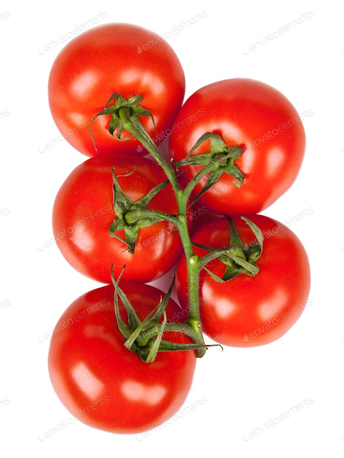 Branch of fresh tomatoes with water droplets isolated