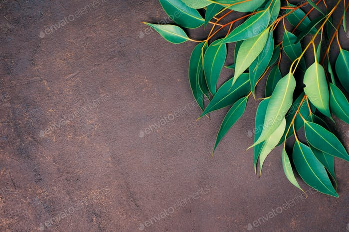 Brown Textured Background with Eucalyptus Branches