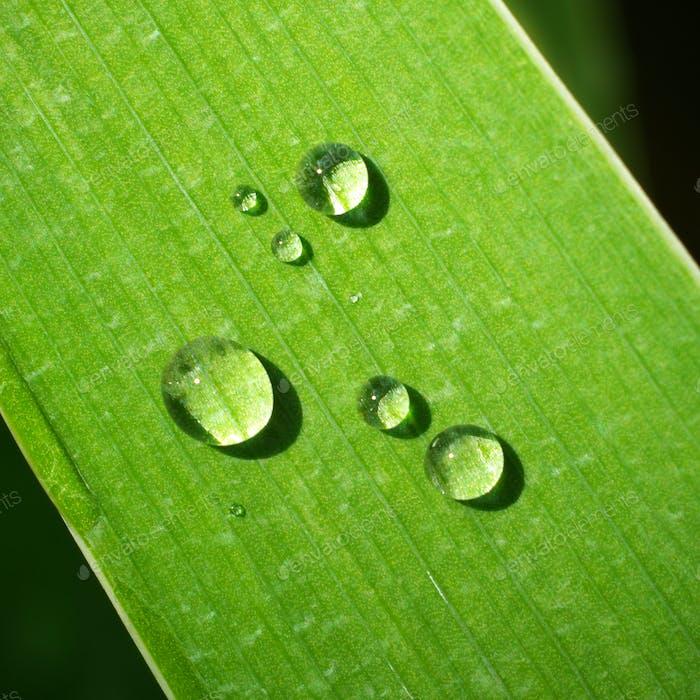 Macro of dew on green leaf