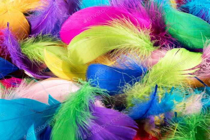 Background texture of colorful dyed bird feathers