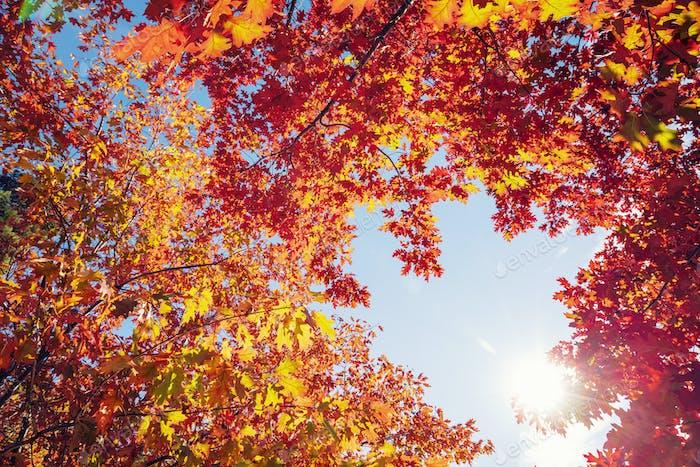 Autumn tree leaves on sunny sky background