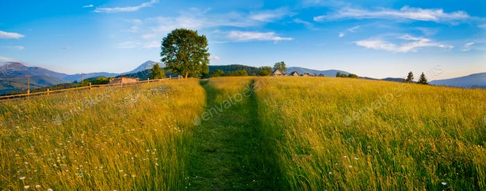 beautiful field in Carpathians
