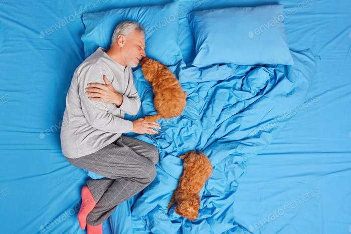 Fast asleep. Relaxed grey haired European man wears pajama has nap on comfortable bed with two puppi