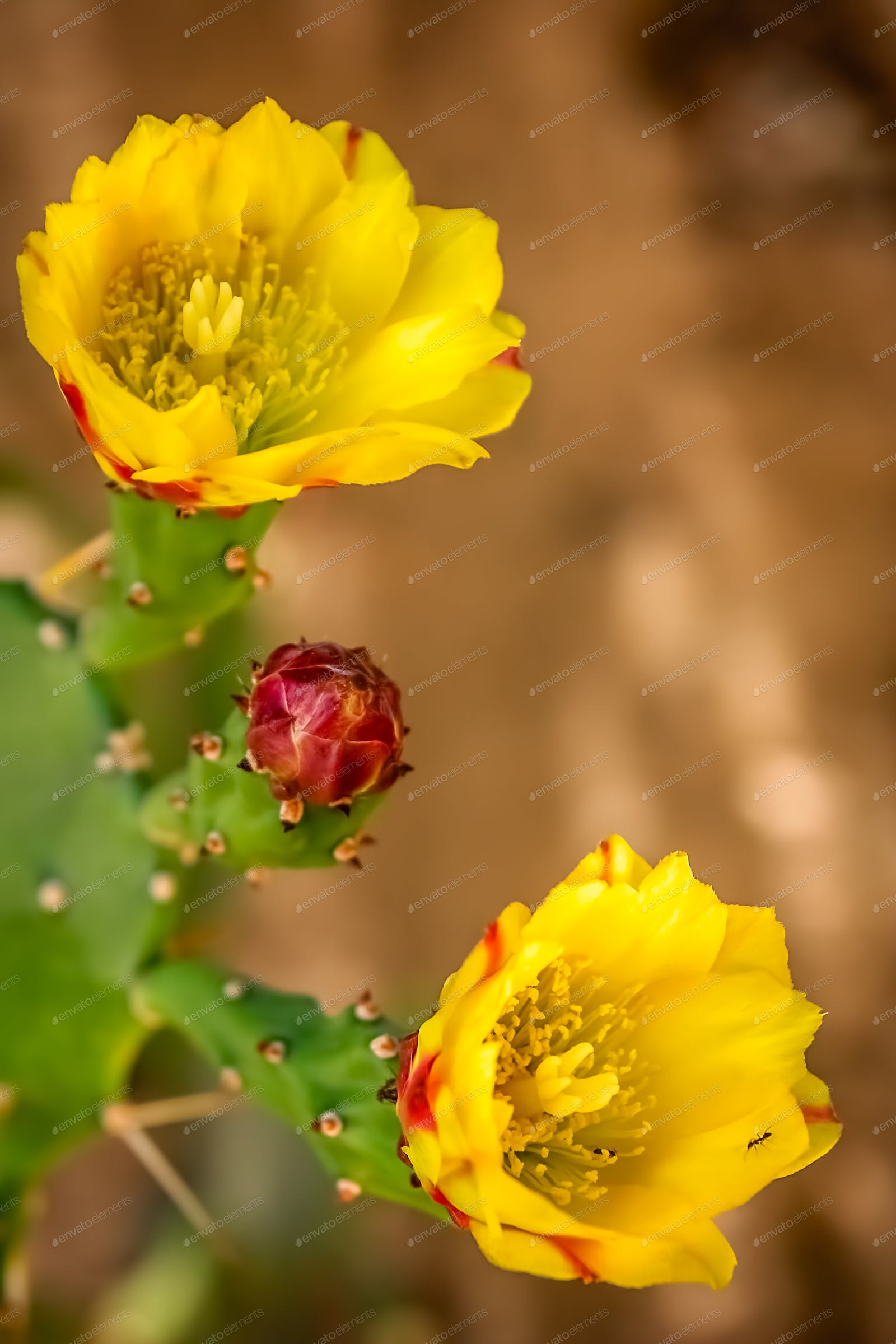 Yellow Flowers Of A Blooming Cactus Photo By Pawopa3336 On Envato