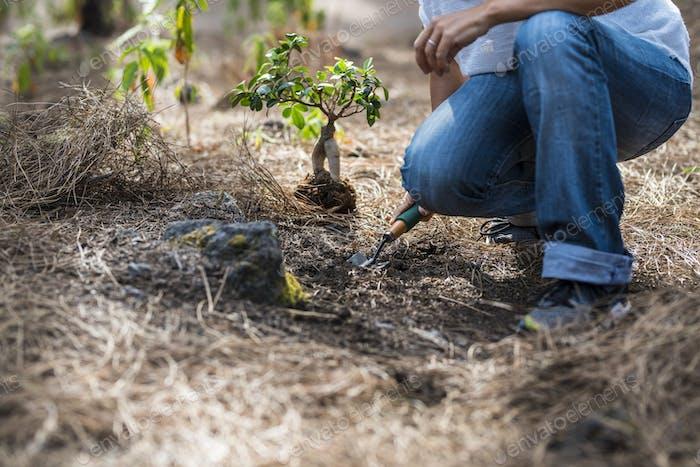 Concepto de jardinería y sin deforestación
