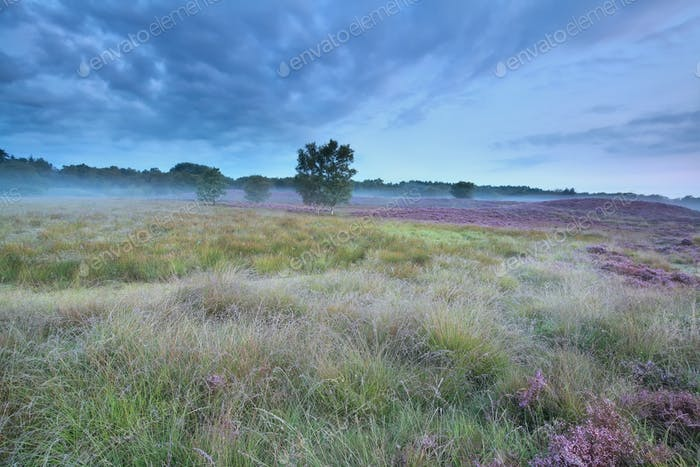 summer morning on marsh with heather