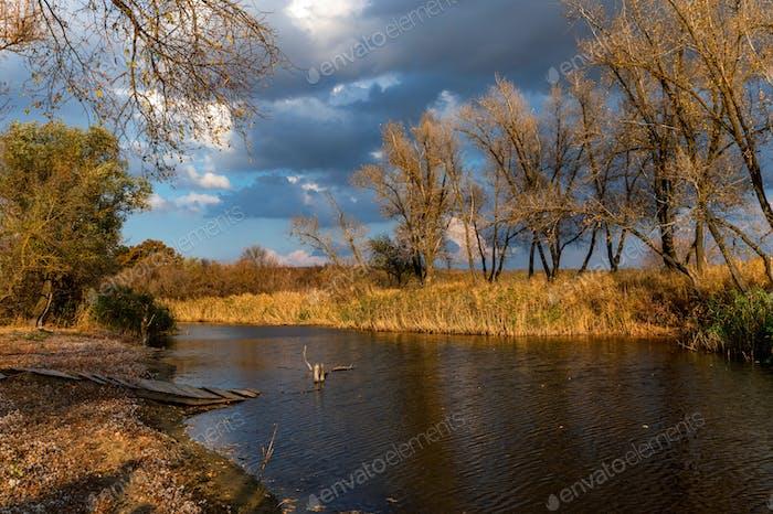 Schöne Natur und Herbstlandschaft mit gelben Bäumen am Ufer des Flusses Don