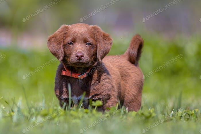 Little puppy in the garden