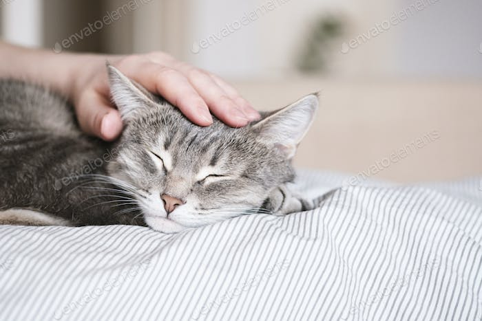 The hostess gently strokes her cat on the fur. World Pet Day