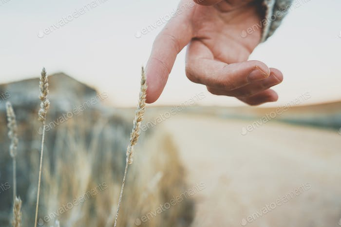 Man's hand touching a fragile spike