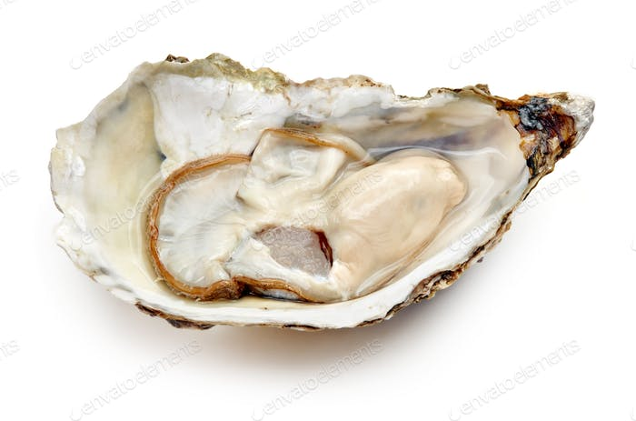 Opened fresh oyster