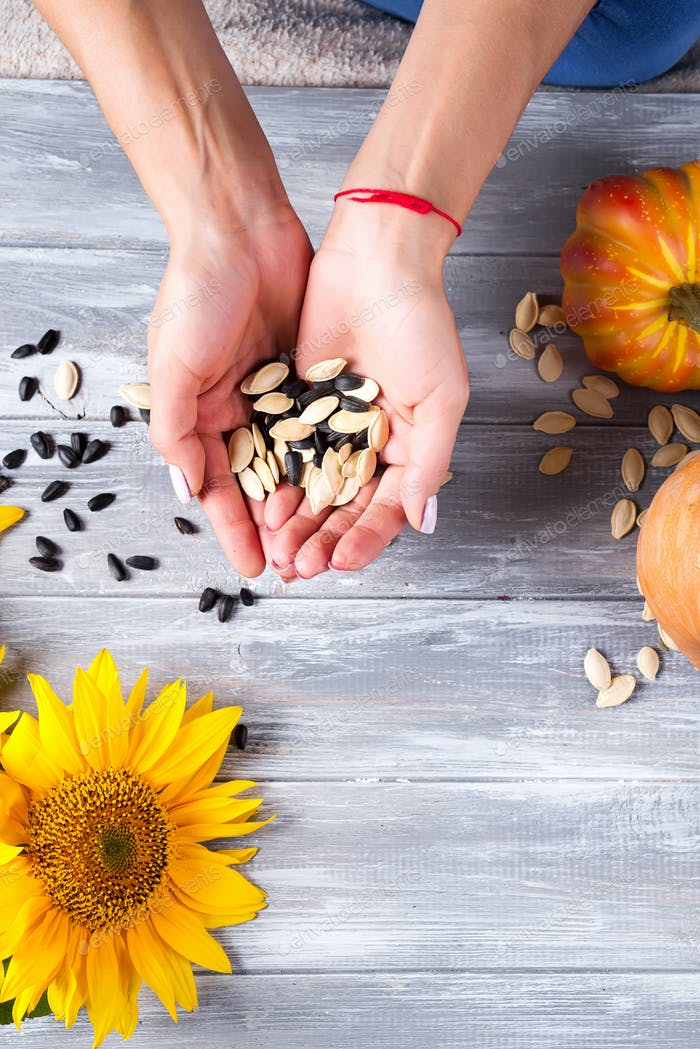 Hands of a girl holding sunflower seeds and a pumpkin on a gray wooden background