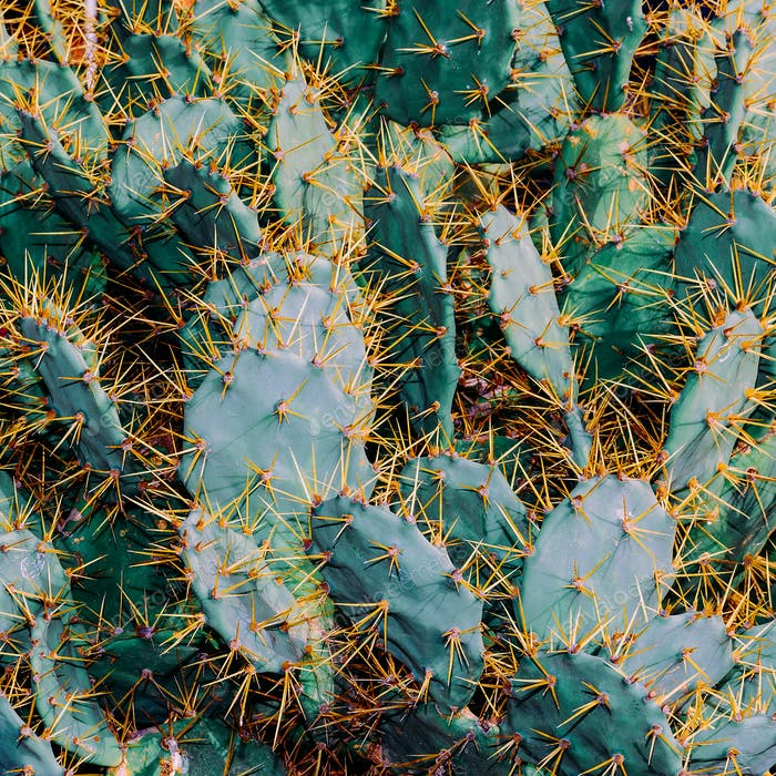Cactus Background. Cacti lover Concept