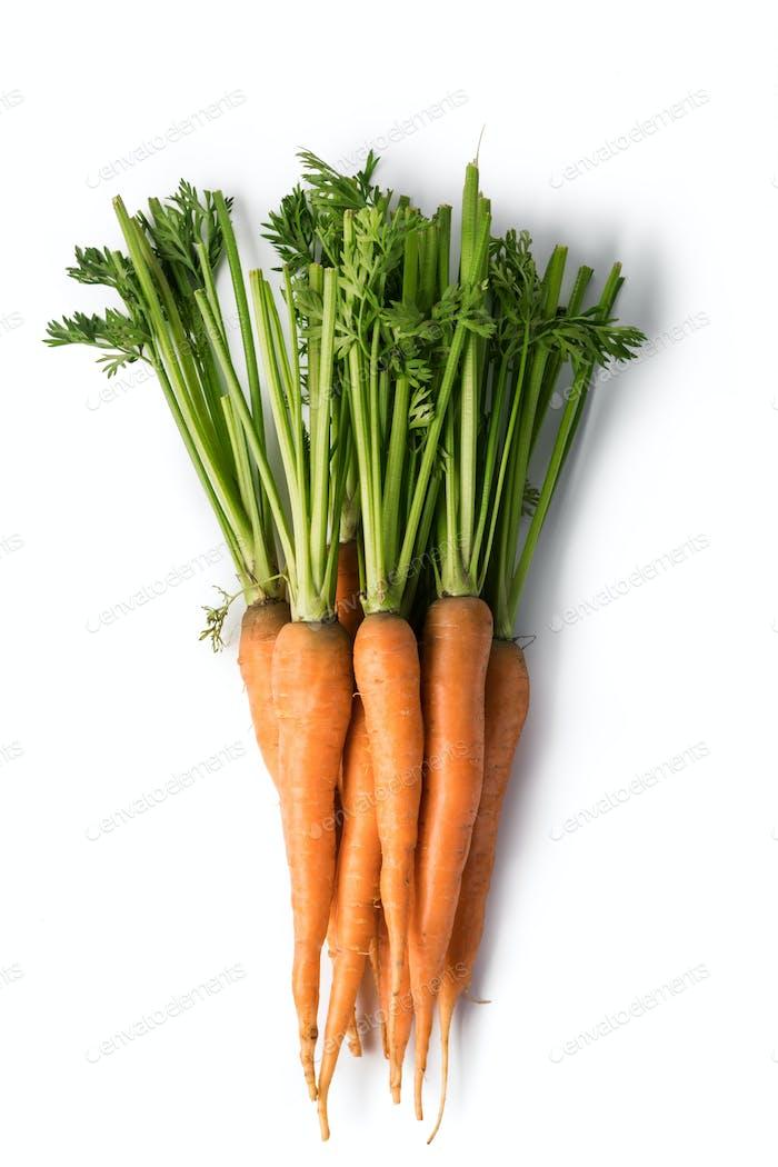 Thumbnail for Carrot