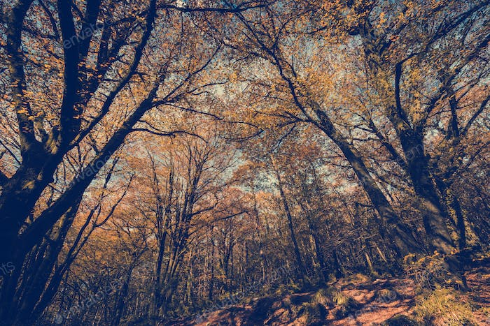 Wild forest at autumn,toned and filtered image effect