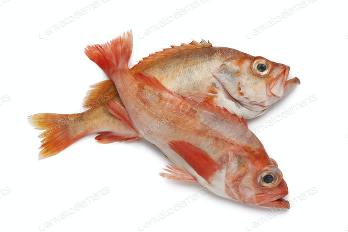 Pair of redfishes