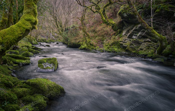 Cold winter atmosphere in a mossy gorge