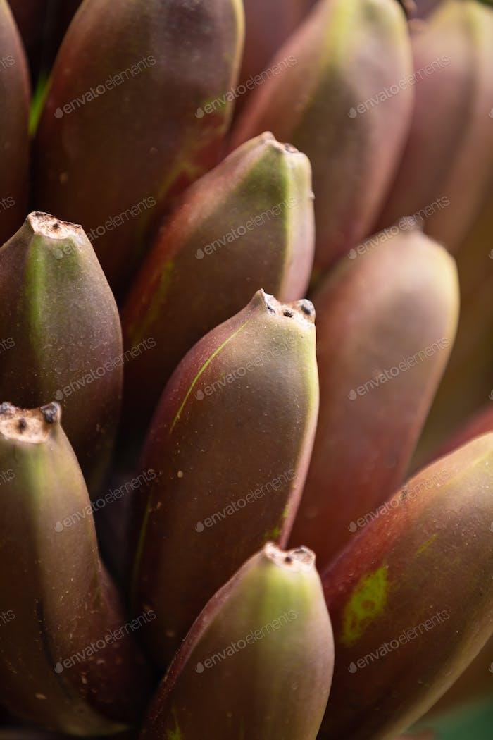 Full Frame Of Fresh Organic Red Banana's Bunch