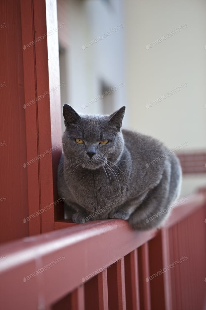 Cat waiting on a balcony