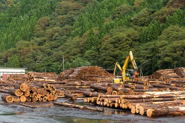 Timber industry