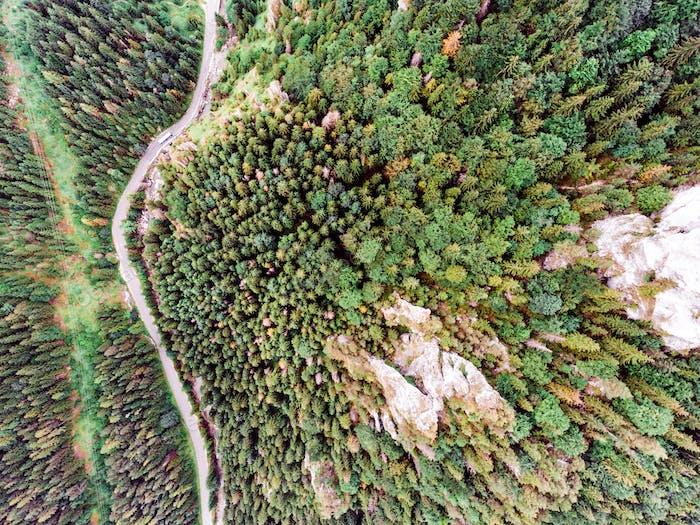 Road in coniferous forest, rocky hills. Mala Fatra, Slovakia.