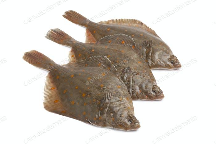 Fresh raw plaice fishes