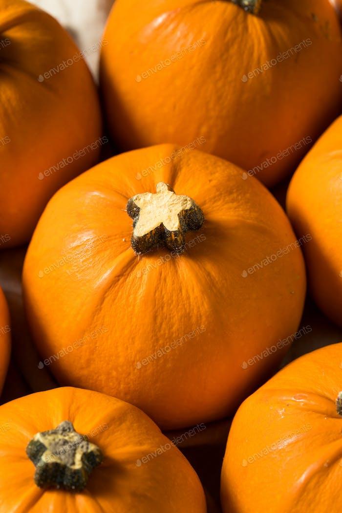Raw Bio Mini Orange Kürbisse