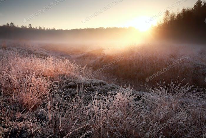 winter sunrise over frosty meadow